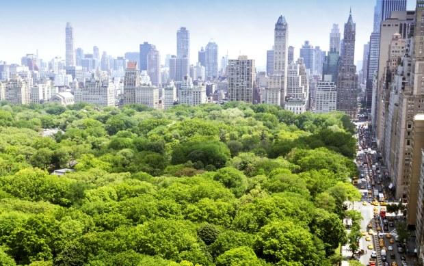 million-trees-new-york-01